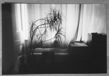 Bishy's Plant